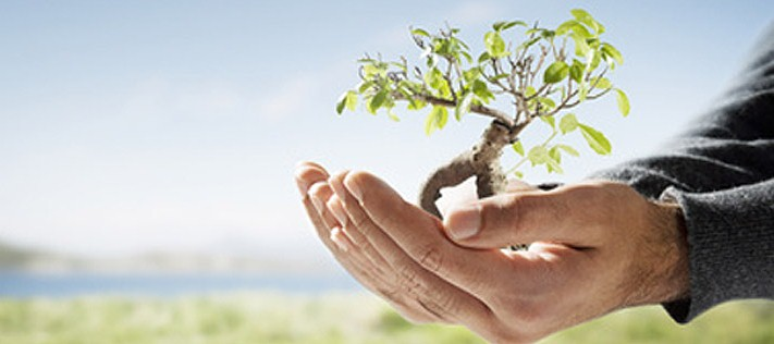 Environmental Consultancy firm : What it takes to Be one?