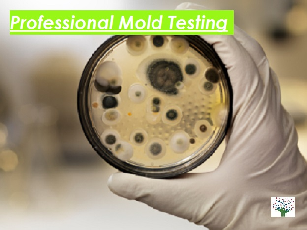 Mold Testing for Homes