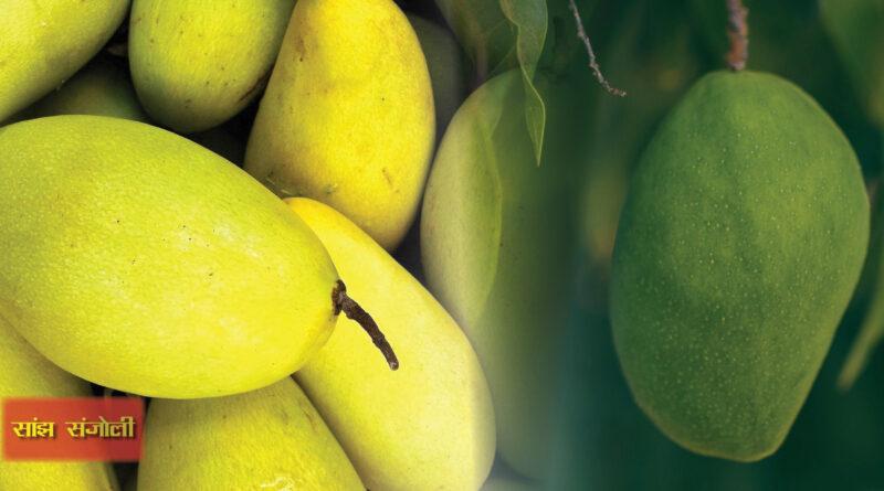 hindi magazine, कच्चे आम के फायदे, देसी आम के फायदे, पके आम खाने के फायदे और नुकसान, आम और दूध, आम में विटामिन, आम के पत्ते का उपयोग, अमरूद के फायदे, आम के फूल,