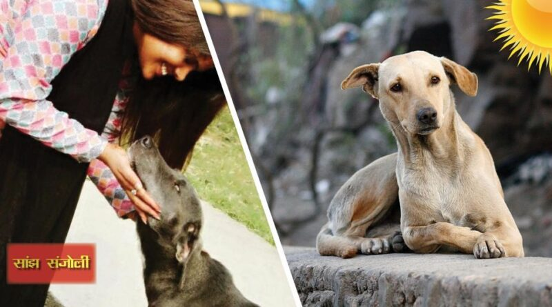 We should take care of our pets as well as the destitute animals in the streets. Taking care of these unique animals is like making humanity meaningful, there are many things that we can take care of by taking care of them.