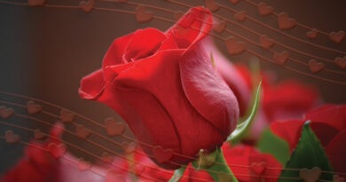 meaning of red rose in hindi