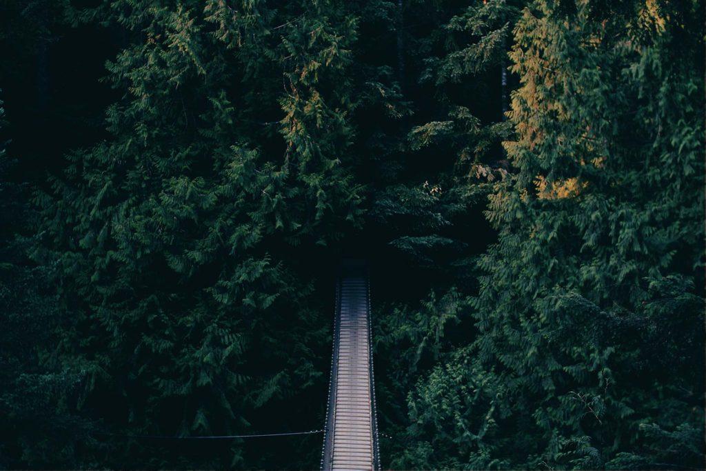En vej, som fører ind i skoven.