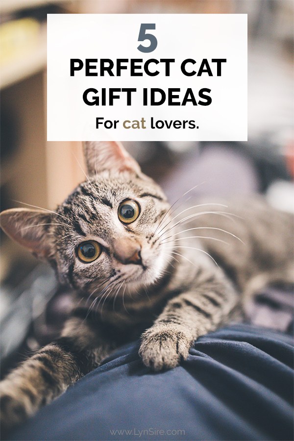 5 Perfect Cat Gift Ideas for cat lovers