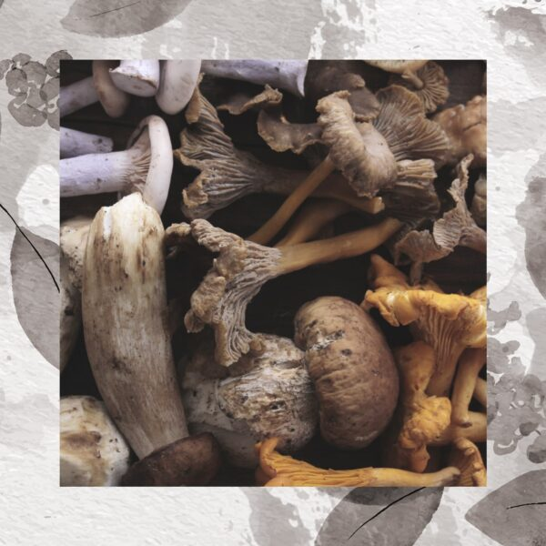 Mushroom Blend Capsules 60x500mg