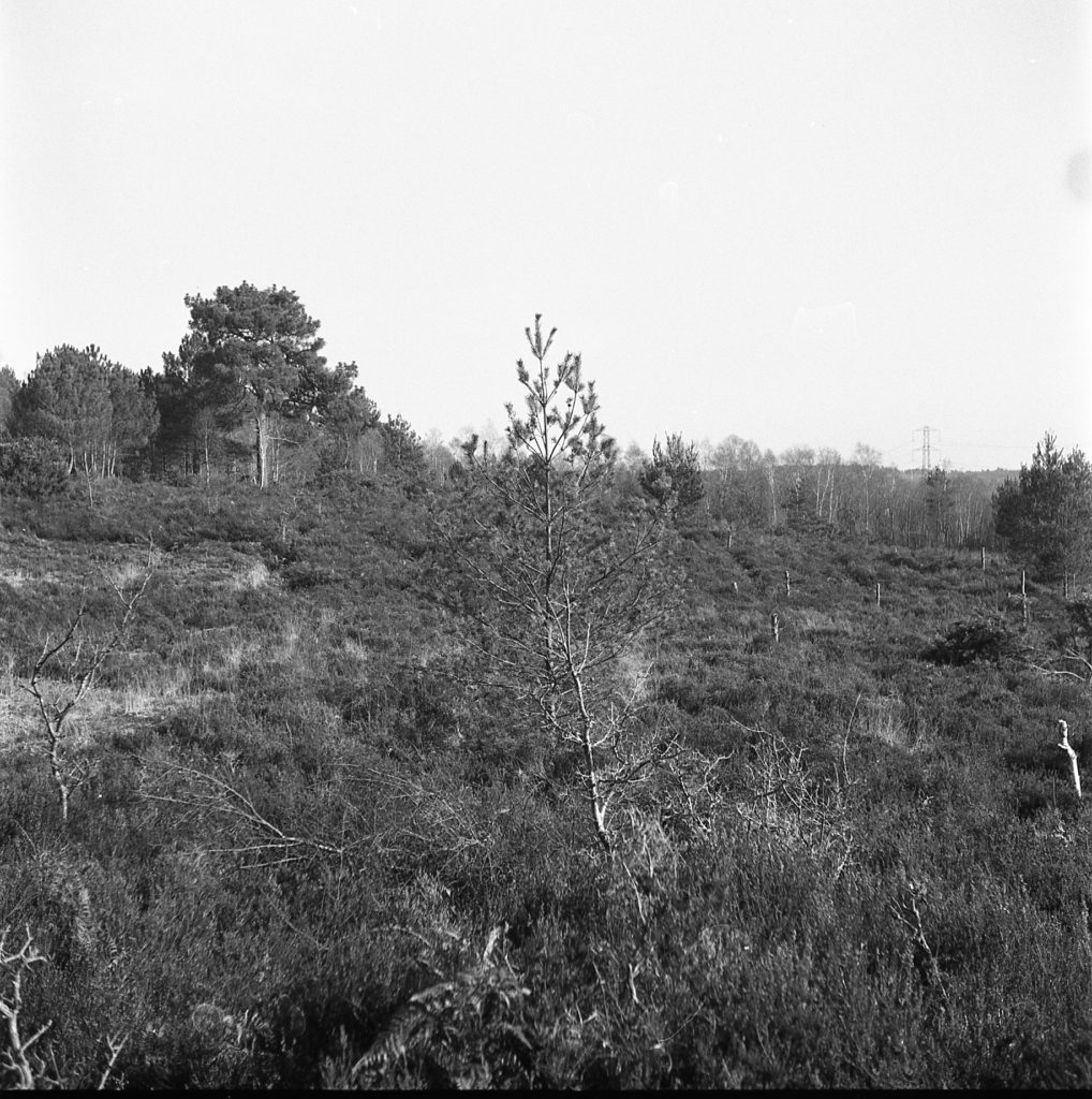 yashica 44 tlr 127 format rerapan film b&w black white wildmoor heath crowthorne berkshire outdoors trees