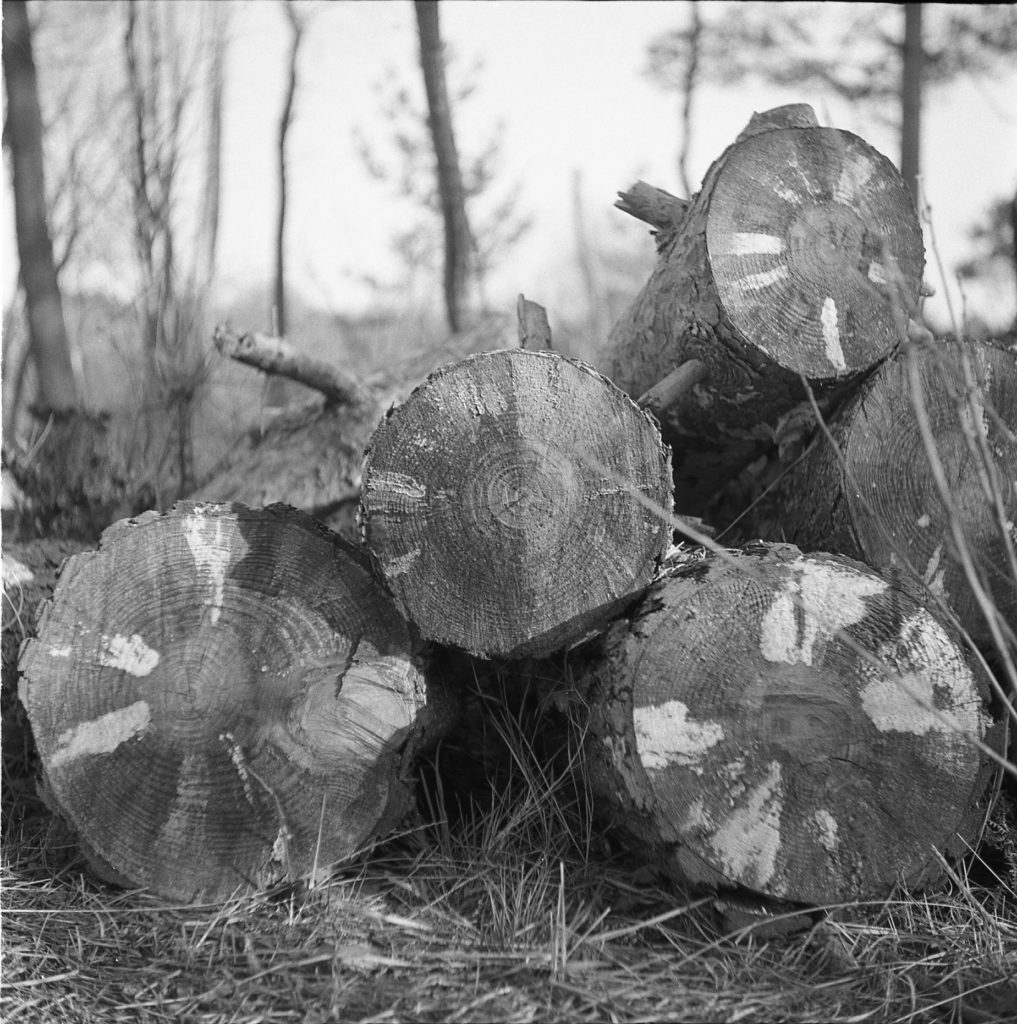 Yashica 44 TLR rerapan 100 127 format film b&w wildmoor heath crowthorne berkshire outdoors logs wood