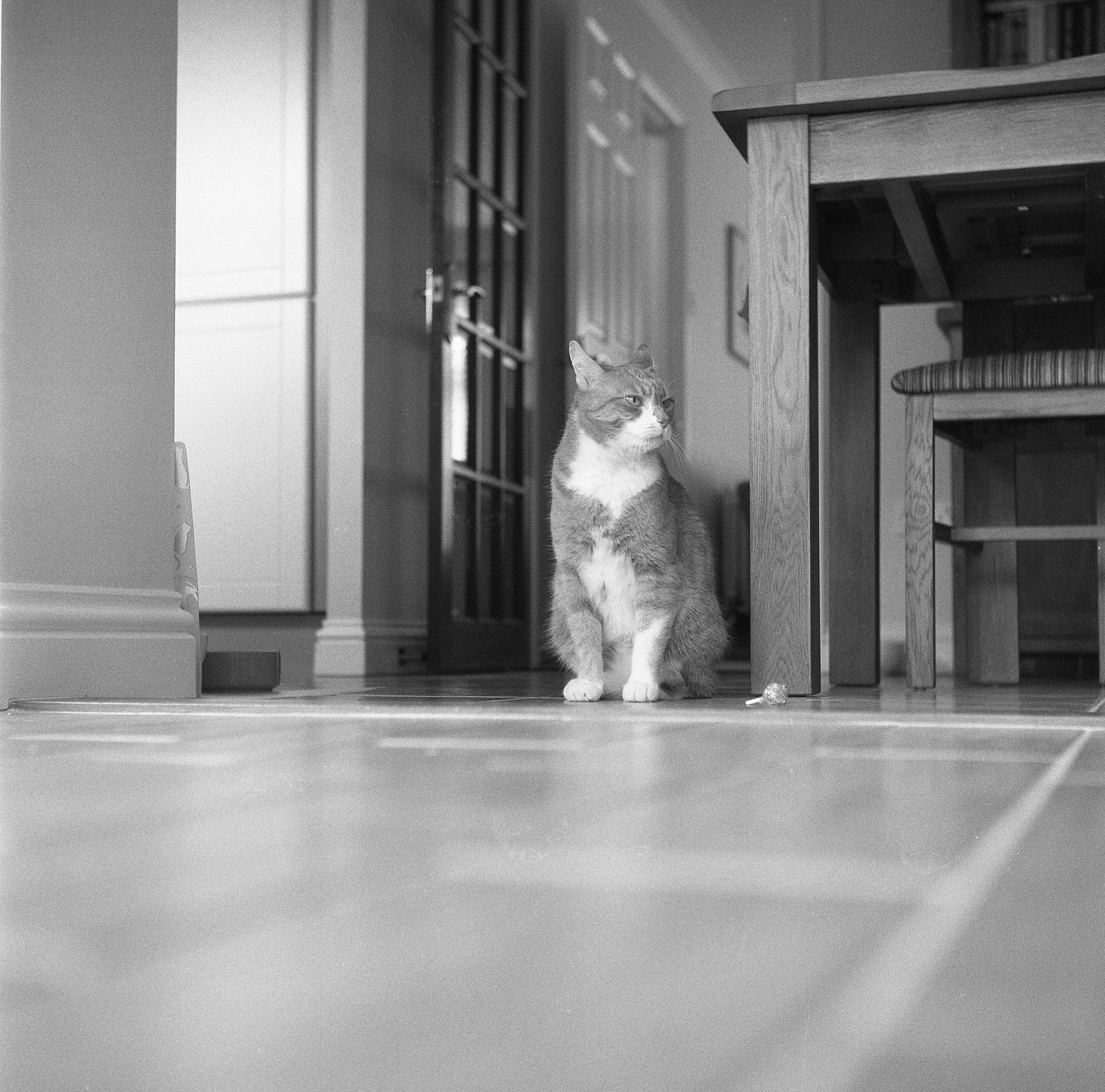 yashica 635 tlr ilford delta 3200 cat indoor