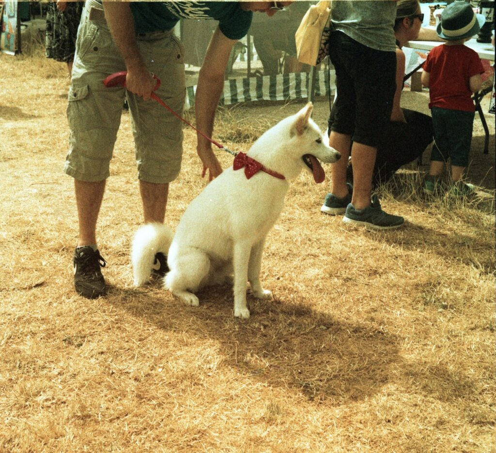 yashica 44 TLR 127 format rollei crossbird cross processing slide film summer fete fair fayre people dog