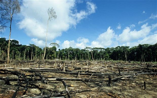 Deforestration in Borneo