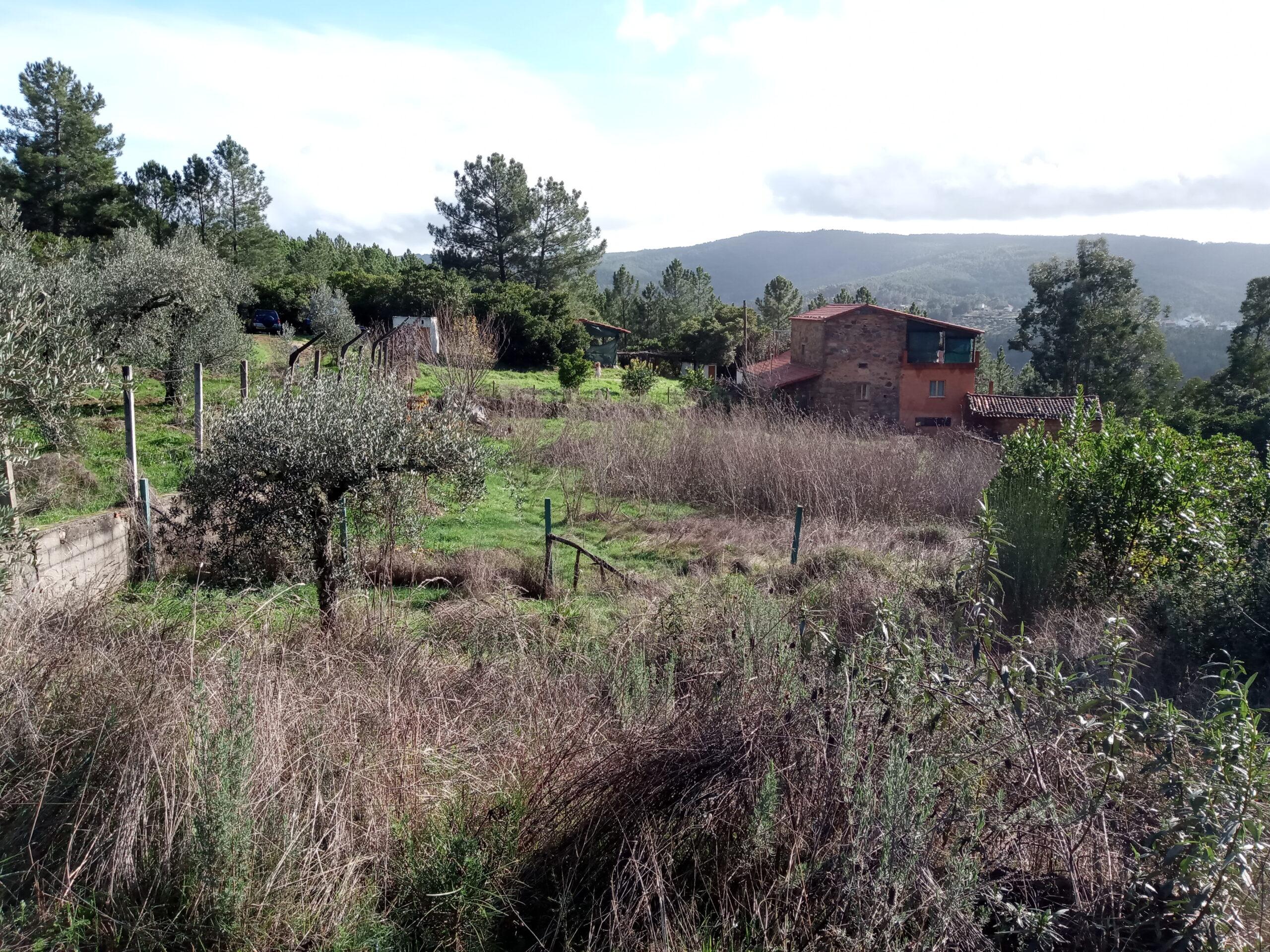 Quinta da Vinha, near Oleiros