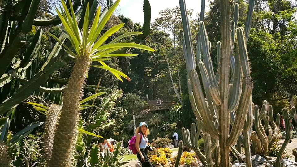Rio de Janeiro'daki Botanik Bahçeden Bir Enstantene