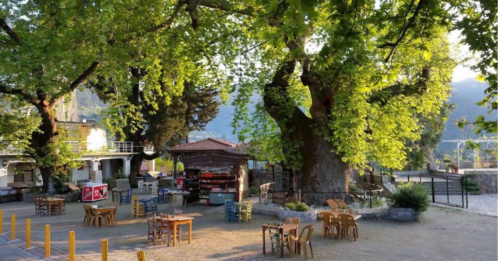 Bayır Köyü Asırlık Çınar Ağacı