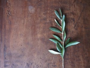 olivo-97460_1280