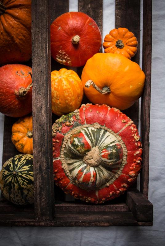 pumpkins-1-2-1
