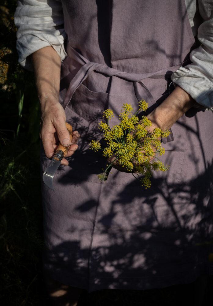 picking fennel flowers