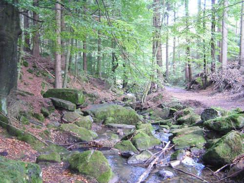 Im Silberbachtal, die Grenze zwischen Teutoburger Wald und Eggegebirge