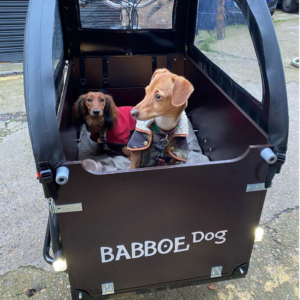 George and Friends dogs in cargo bike