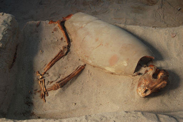 Archaeologist Found 2,000 Year Old Pet Cemetery Discovered In Egypt