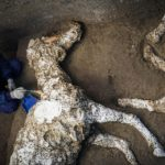 An archaeologist inspects the remains of a horse skeleton in the Pompeii archaeological site. The animal was found with its harness attached