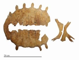 The top and bottom of a turtle shell (known as the carapace and plastron) from the burial at Kavusan Hoyuk.
