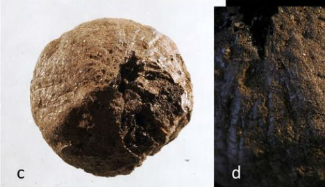 1,500-Year-Old Onion Discovered in Sweden that reveals Roman links with 'Sweden's Pompeii'