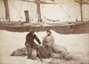 Fridtjof Nansen (left) and Captain Axel Krefting, sitting on just shot polar bear with the Viking in the background