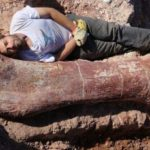 The biggest dinosaur EVER was discovered in Argentina & weighed 77 tons