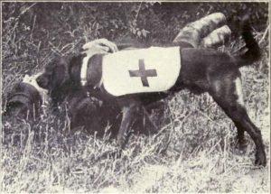 Ambulance dog during WWI