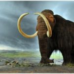 130,000-Year-Old Woolly Mammoth And Rhino Bones Unearthed By Road Workers In England