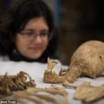 The skull of one of the Roman-age skeletons discovered at Driffield Terrace in York.