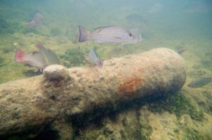 Sunken old cannon with some fish swimming around.