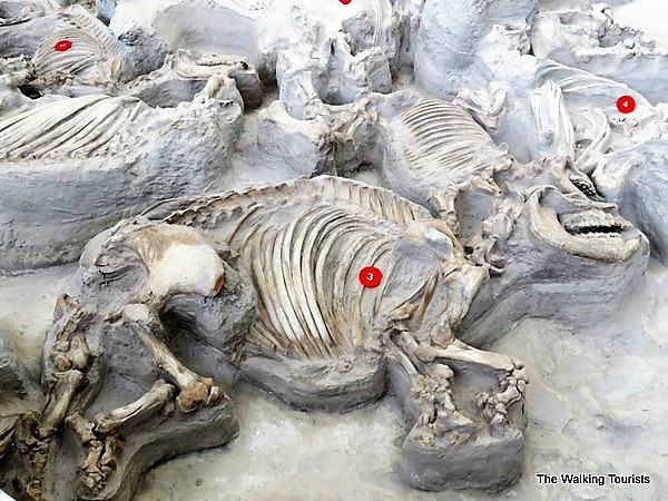 Hundreds of Well Preserved Prehistoric Animals have been Found in an Ancient Volcanic Ashbed in Nebraska