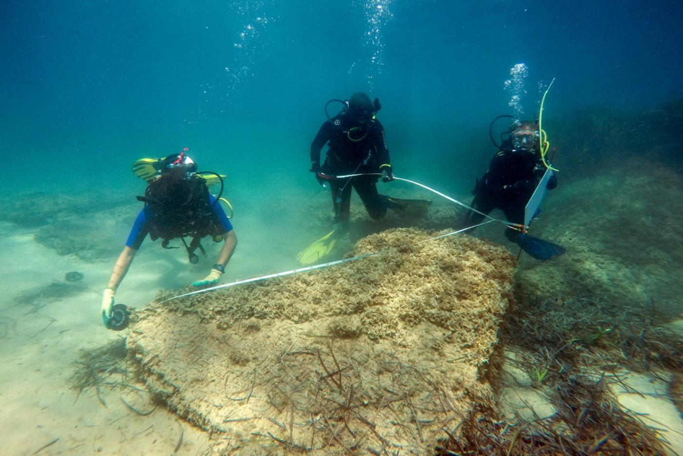 A handout photo from 31 August 2017 shows archaeologists diving at the site of the ancient Roman city of Neapolis