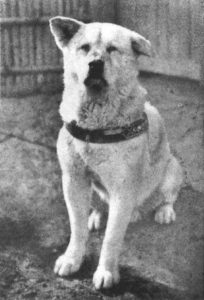 Hachiko's heartbreaking story turned the dog into a national symbol of loyalty in Japan.