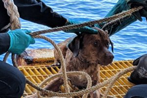 Dog found swimming 135 miles offshore rescued by oil rig workers