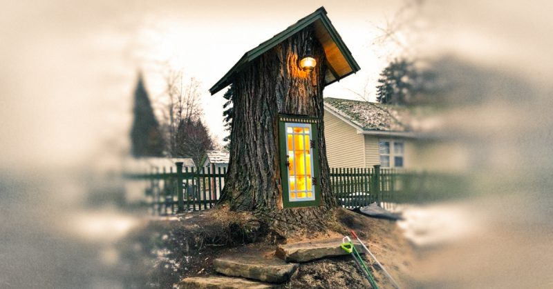 110-Year-Old Tree Has Been Turned into a Tiny Library