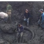 Mammoth Remains Unearthed at Michigan Farm, Hint at Ancient Human Butchering