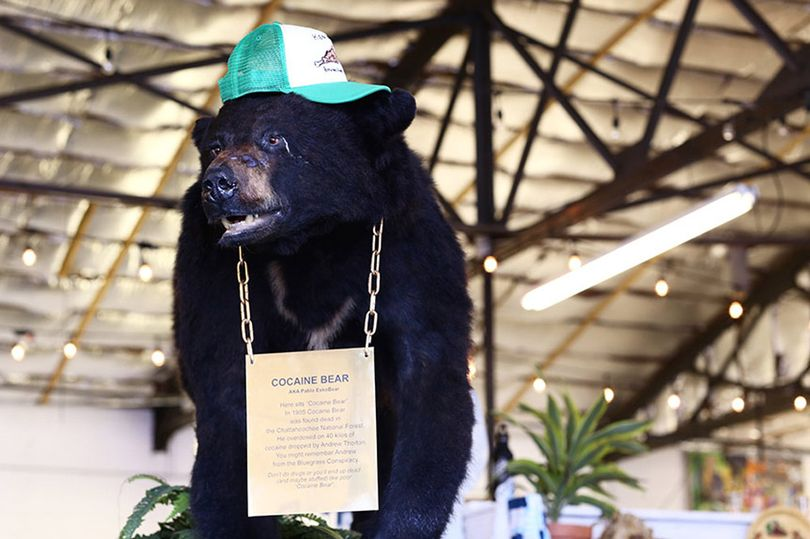 'Pablo EskoBear': The story of the legendary cocaine bear of Kentucky