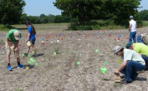 Researchers conducting a surface survey mark the locations of stone flakes, points, and tools with brightly colored flags.