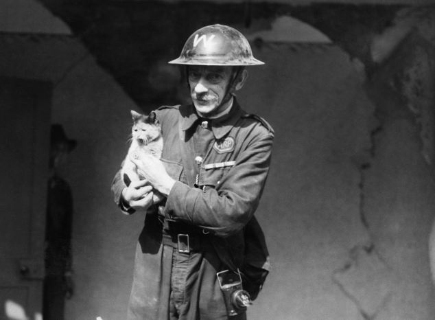 The little-told story of the massive WWII pet cull