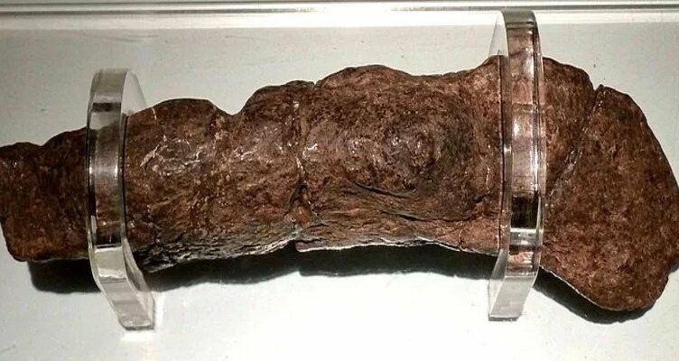 This is the largest fossilized human turd ever found. It belonged to a sick Viking in the 9th century and has been valued at $39,000.