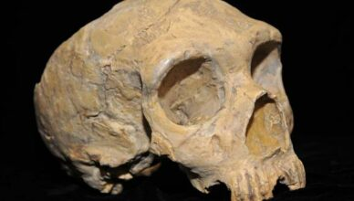 Prehistoric American Indian Skull Found in Kansas City