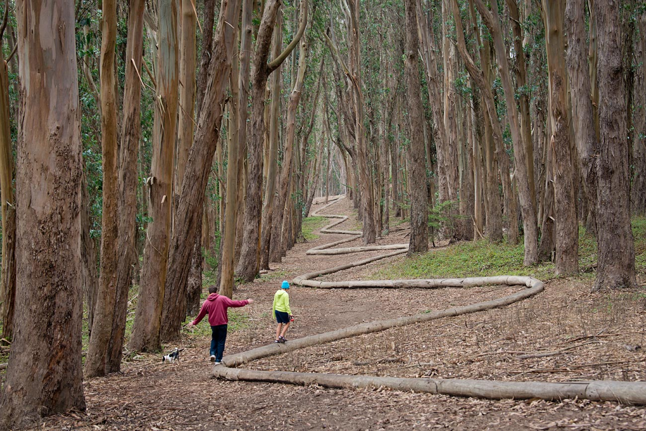 Artist Andy Goldsworthy's 'Wood Line' Follows Rich History of San Francisco's Presidio Forest