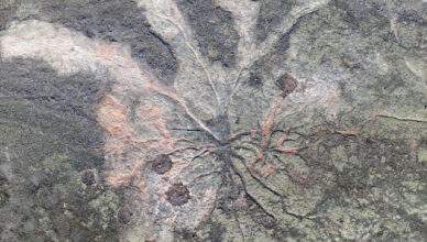 The World's Oldest Fossil Trees Have Been Discovered in New York