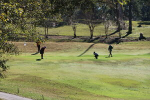 Golfers at Capital City Country Club play a hole just below the crest of a hill that leads to the course's seventh hole, where archaeologists say they've found 40 graves making up a long-forgotten cemetery that was likely for enslaved people.