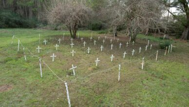 'A type of justice': Florida reform school yields evidence of more graves