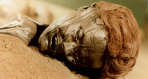 The face of the bog body known as Grauballe man.