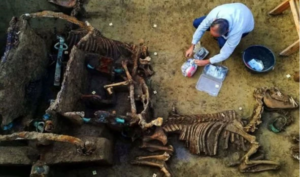The remains of a horse perfectly in order was found