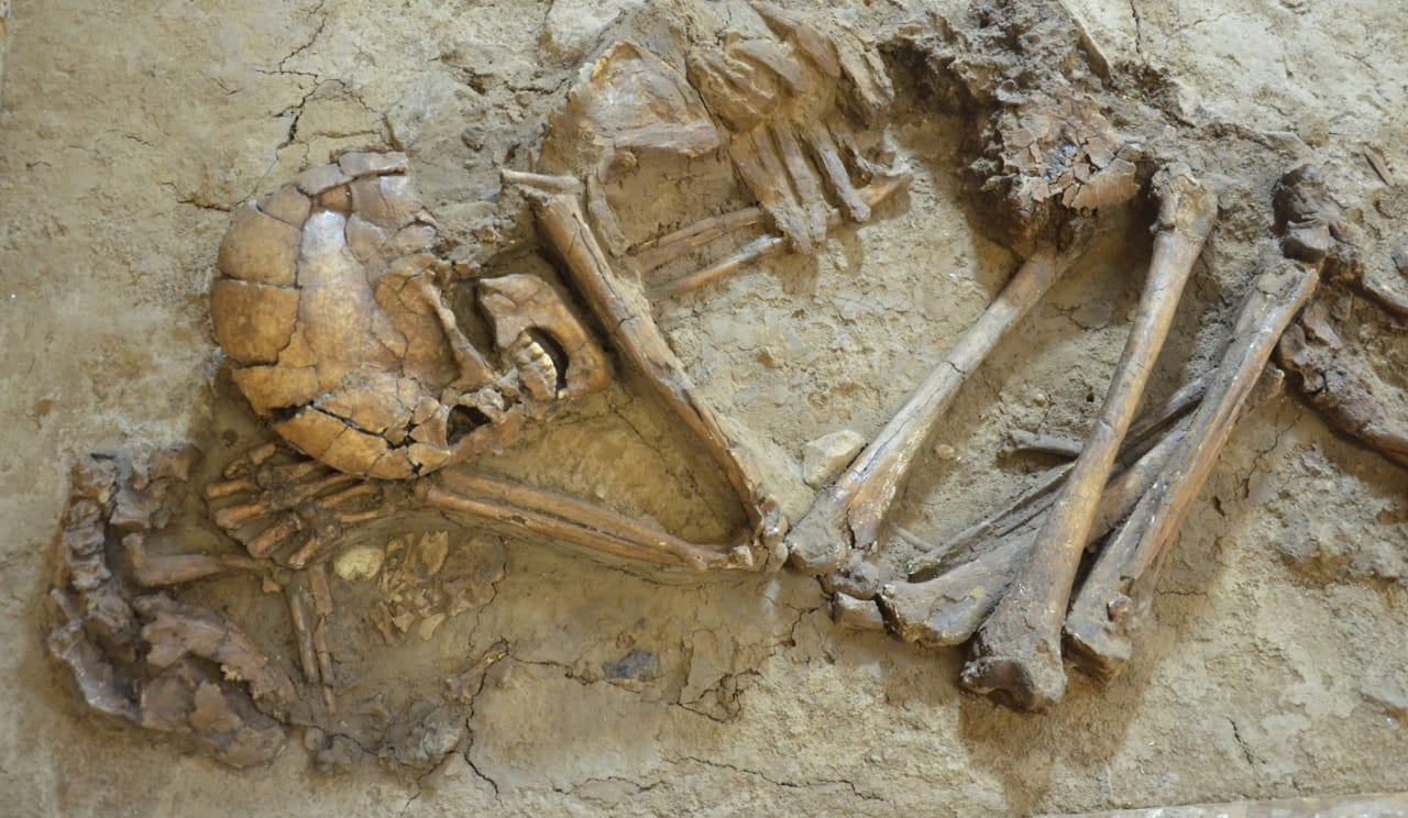 15,000 year old ear infections discovered in burials from the Levant