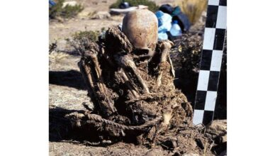Bolivia researchers find twoskeletons withabnormally elongated skull